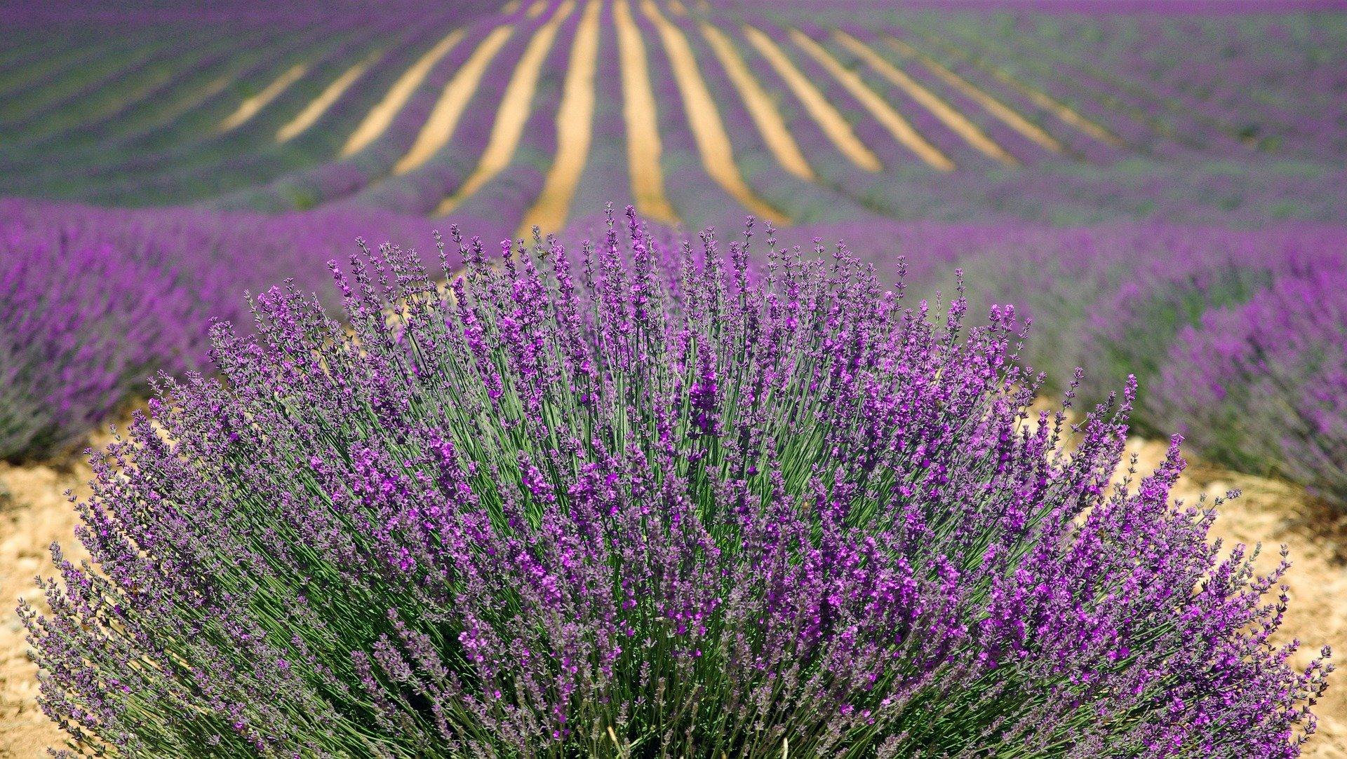 Garde meuble Provence-Aples-Côte d'azur